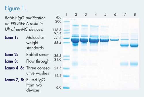 Protein Sample Ultrafiltration Protocols | MilliporeSigma