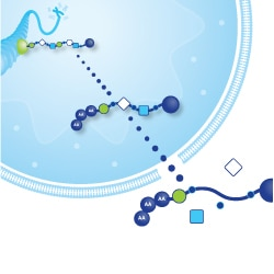 Merck:/Freestyle/BI-Bioscience/Antibodies-Assays/epigenetics-images/rna_overview_250.jpg