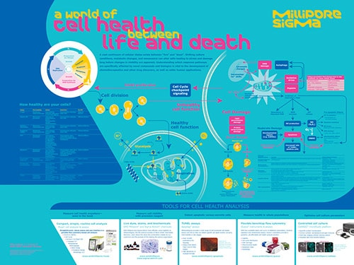 Merck:/Freestyle/BI-Bioscience/Cell-Analysis/Muse/applications/BS-GEN-16-12294_CancerCellHealth_Wallchart_v1.jpg