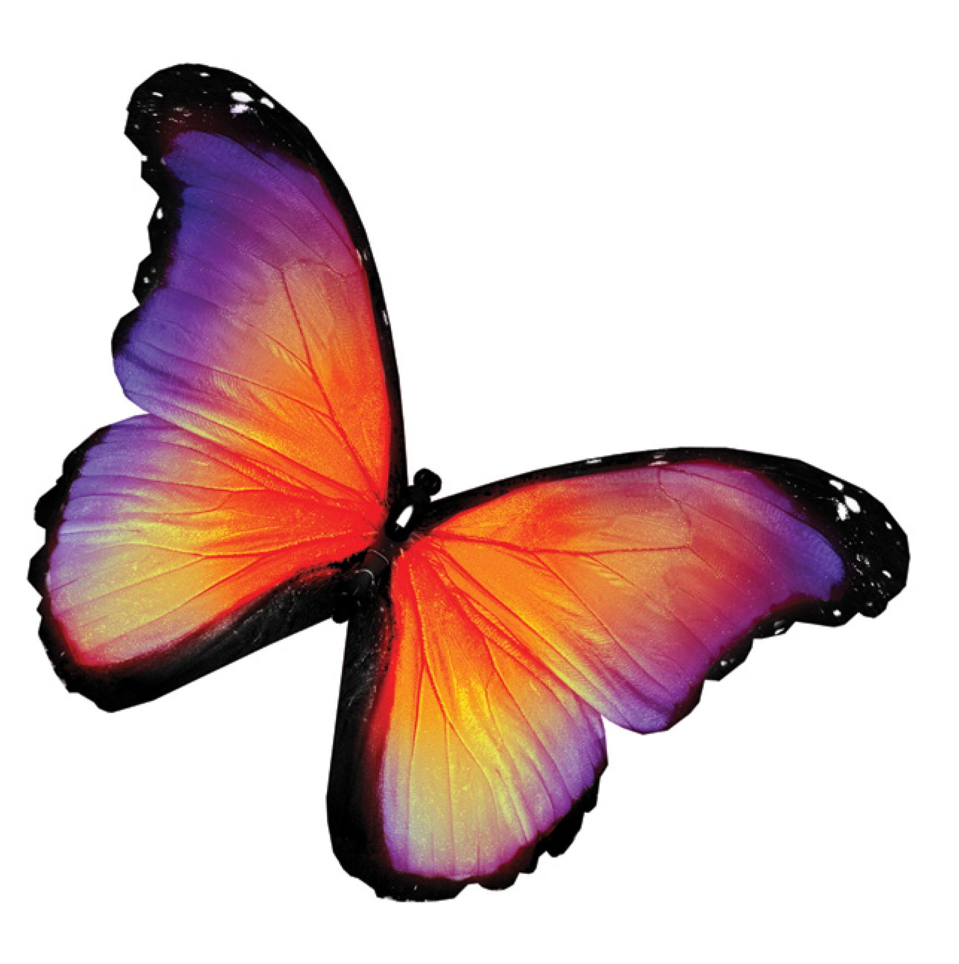 Merck:/Freestyle/BI-Bioscience/Cell-Culture/stem-cell-images/butterfly.jpg