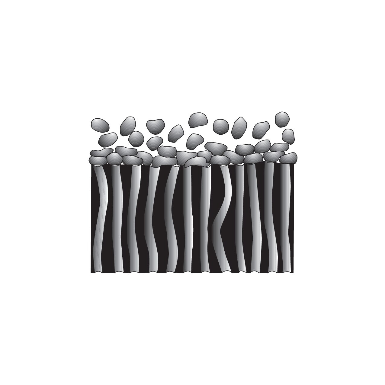 Cross section of membrane filter, particles retained on surface