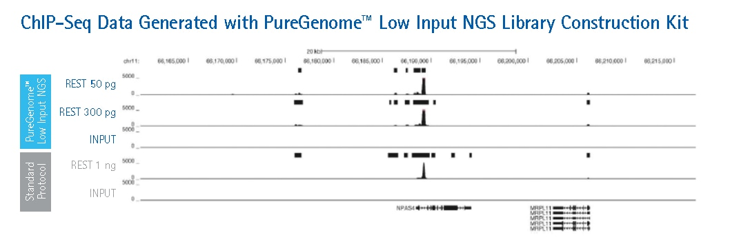 PureGenome low input NGS Kit ChIP-Seq Data