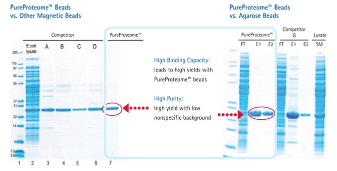 PureProteome™ beads vs agarose beads and other magnetic beads.