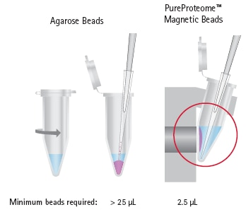 Protein purification magnetic beads vs agarose beads