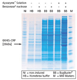 Merck:/Freestyle/BI-Bioscience/Protein-Detection/bugbuster-chart.jpg