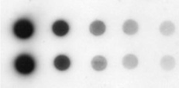 Dot/Slot (Filtration) Blotting | Life Science Research ...