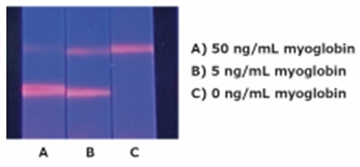 Myoglobin Lateral Flow Test Strips